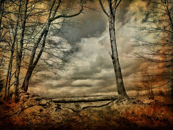 Living the Questions - Pine Singer Photographic Art