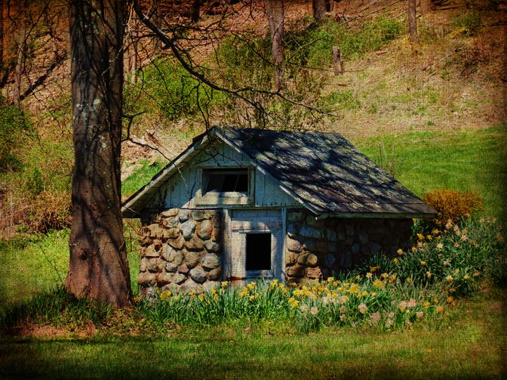 Spring Bursts Forth - Pine Singer Photographic Art