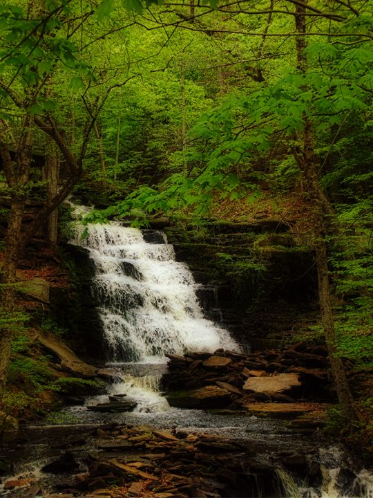 Tranquil Flow - Pine Singer Photographic Art