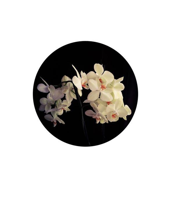 Orchid/ Pinhole series - Luisa González-Reiche