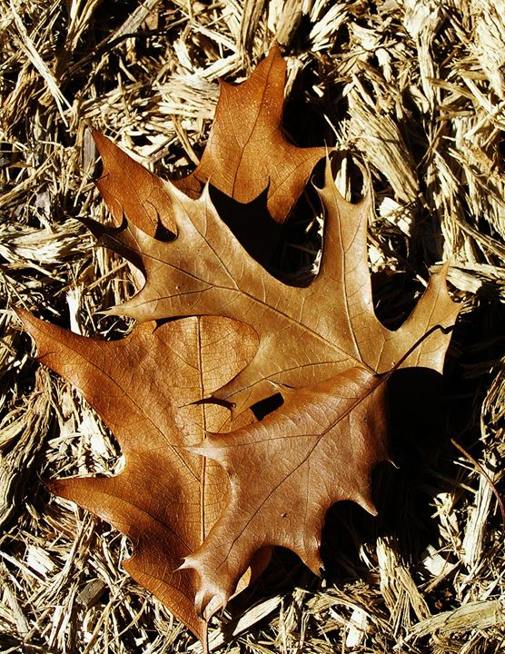 Leaf - Art From The Woods