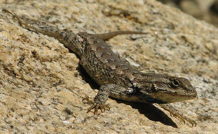Lizard - Art From The Woods