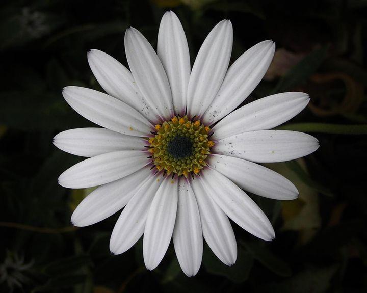 White Flower - Art From The Woods