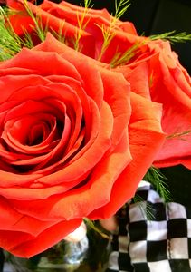 Red Check Rose