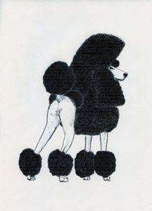 Poodle Behind
