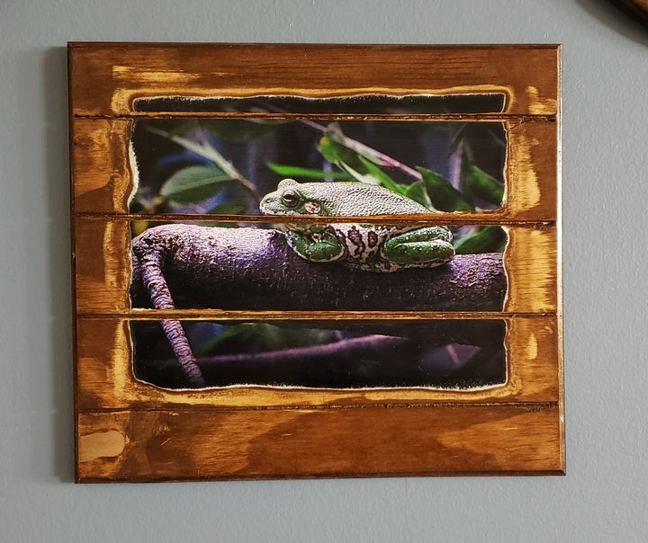 Frog on a Log - Brandy's Alluring Images, LLC