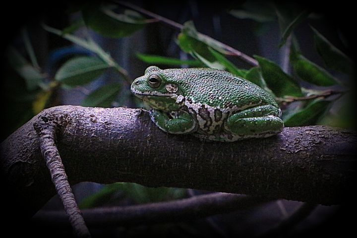 Frog on a log - Brandy's Alluring Images, LLC