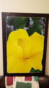 yellow hibiscus - Brandy's Alluring Images, LLC
