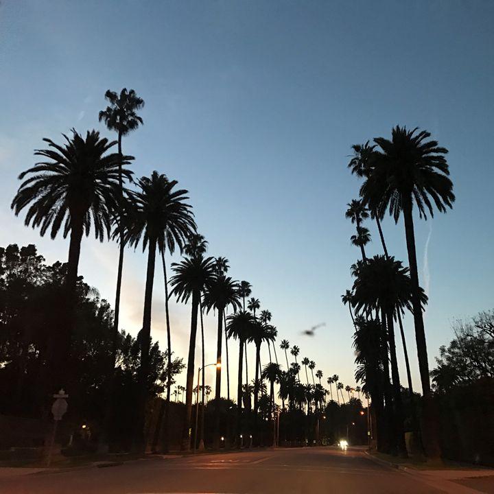 Beverly Hills Palms - Tim Thompson