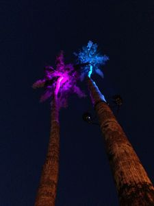 Palm Trees - Purple & Blue