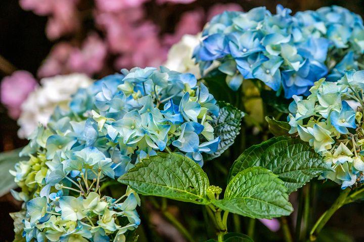 Beautiful flowers. - Lery Solo