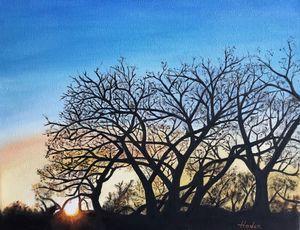 Bosque Winter Sunset