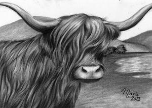 Highland Cow - Mentyra