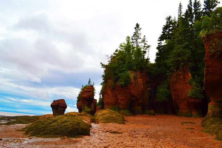 Hopewell Rocks - S. LeBlanc Creations