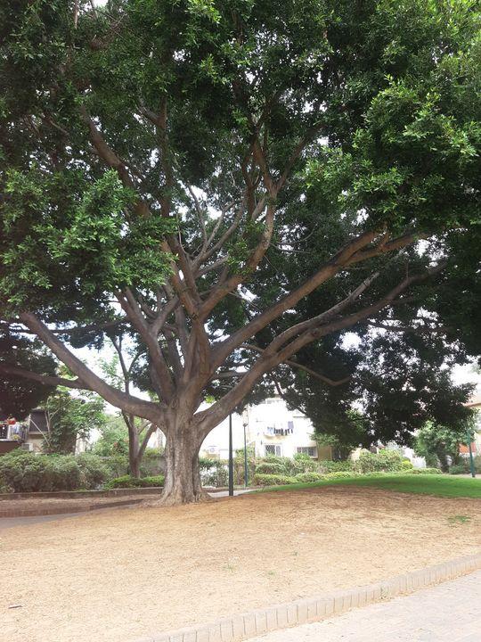 Tree of Life - RosArt