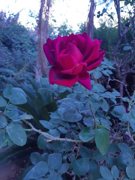 Rose - RosArt