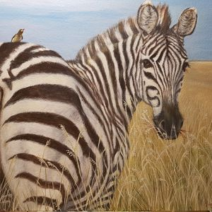 Zebra with Ox pecker