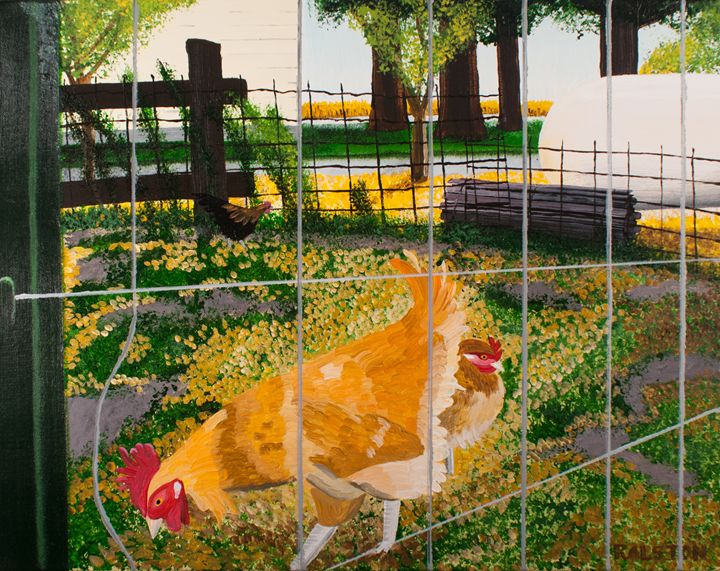 The chicken yard - Steve Ralston