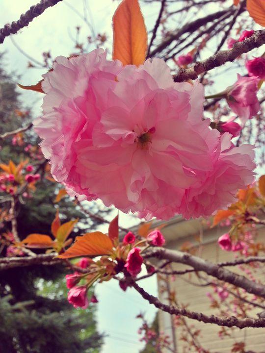First Spring - Sennybae