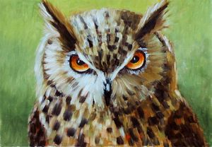 Owl.Oil painting