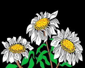 Paintings, Prints, Drawings, Daisies
