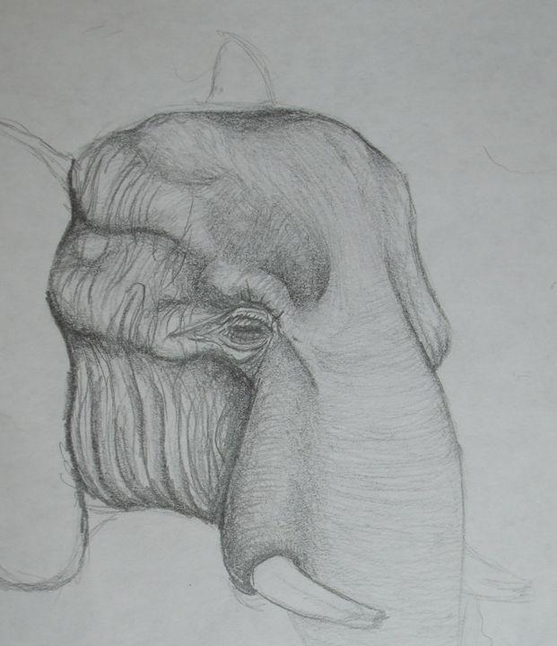 Elephant - Cecelia Finnegan