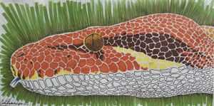 Snake - Cecelia Finnegan