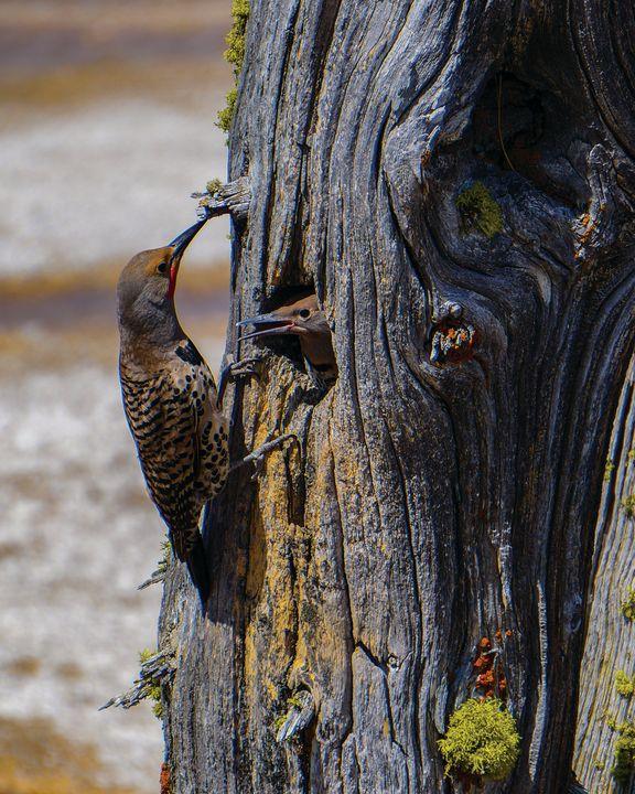 Two birds - Rosemary Wendorf