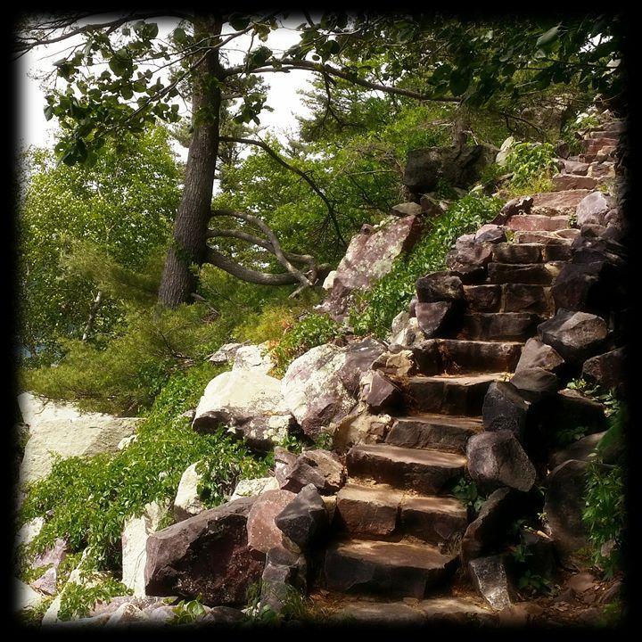 The Path - Rosemary Wendorf