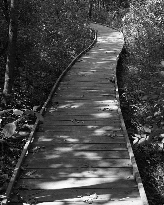 The Path Least Taken - Rosemary Wendorf