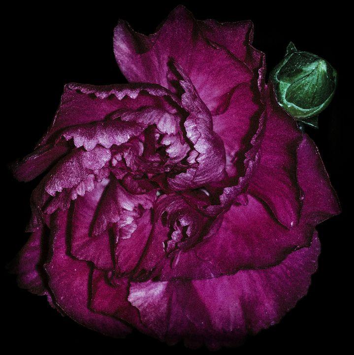 Purple Contemplation - Rosemary Wendorf