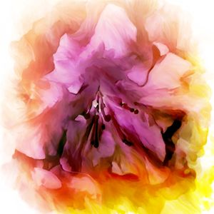Flower Splash