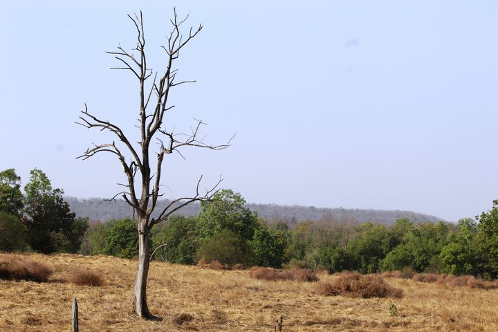 a view of pench national park - soni