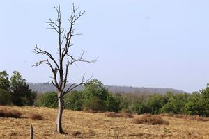 a view of pench national park