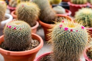 Varieties of cactus plant in the pot