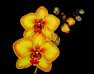 Yellow orchids #3 of 4