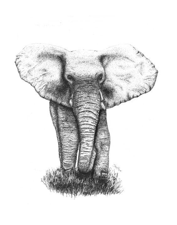 Elephant - J. Tenhove