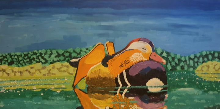 Mandarin duck - Patricio Polanski