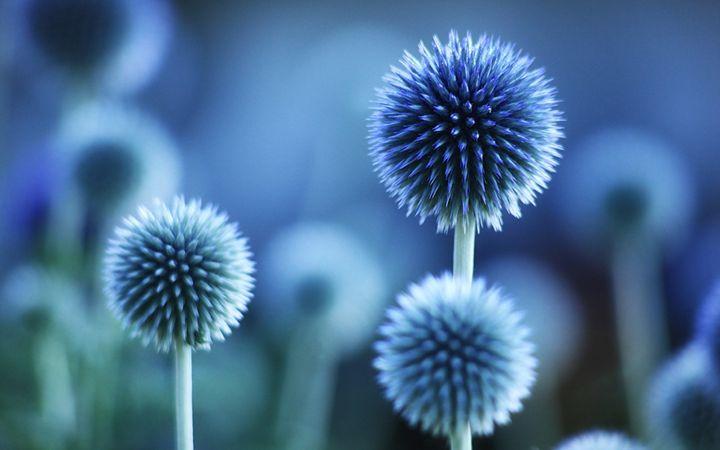 Blue Flower Prestige - DimpleArt Industries