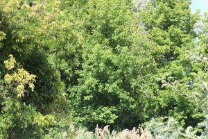 epic tree invasion