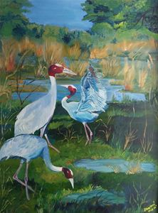 sarus crane and wetlands
