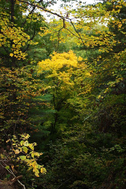 Autumn Gold - Jenny Kimble