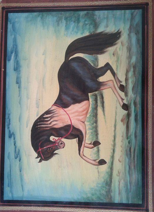 horse -  Abhi23592