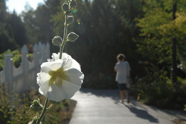 White Flower -  Aidenma23