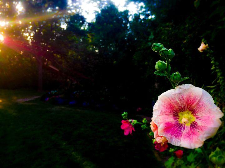 Flower -  Aidenma23