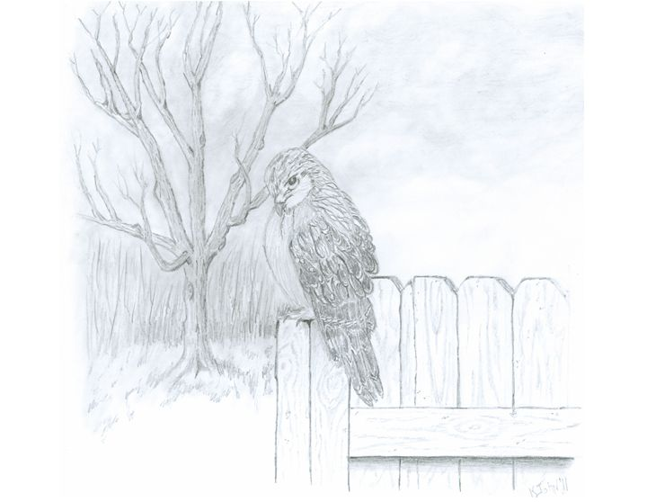 Red-Tailed Hawk Perched - KJohn Art