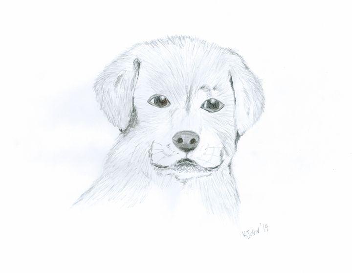 Labrador Puppy - KJohn Art