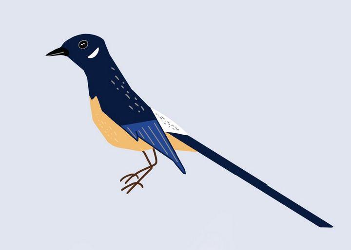 Magpie Bird Minimalist - tiazArtDesigns