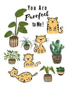 You Are Purrfect To Me