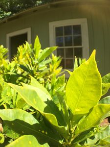 Green house and leafs